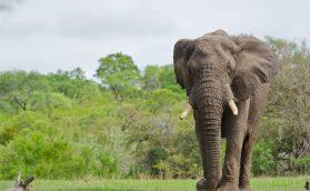 O que os animais selvagens podem nos ensinar em tempos difíceis?
